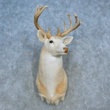 White Whitetail Deer Shoulder Taxidermy Mount For Sale