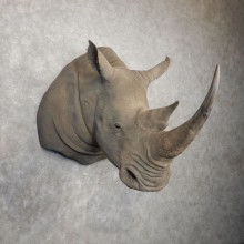 White Rhinoceros Replica Shoulder Mount For Sale #20405 @ The Taxidermy Store