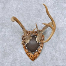 Whitetail Deer Antler Plaque Taxidermy Mount #13859 For Sale @ The Taxidermy Store