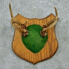 Whitetail Deer Antlers Plaque Taxidermy Mount #12979 For Sale @ The Taxidermy Store