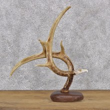 Whitetail Deer Antler Eagle Head Carving #107445 For Sale @ The Taxidermy Store