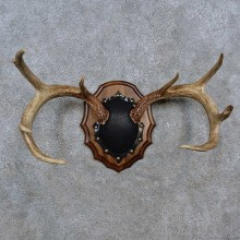 Whitetail Deer Antler Plaque For Sale #15234 @ The Taxidermy Store