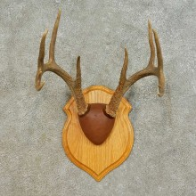Whitetail Deer Antler Plaque Mount For Sale #16472 @ The Taxidermy Store