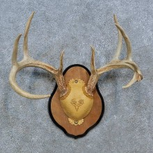 Whitetail Deer Antler Plaque Mount For Sale #15351 @ The Taxidermy Store