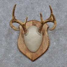 Whitetail Deer Antler Plaque Mount For Sale #15656 @ The Taxidermy Store