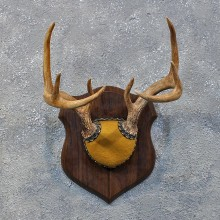 Whitetail Deer Antler Plaque #12167 For Sale @ The Taxidermy Store
