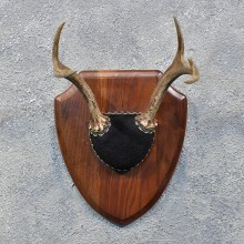 Whitetail Deer Antler Plaque #12175 For Sale @ The Taxidermy Store