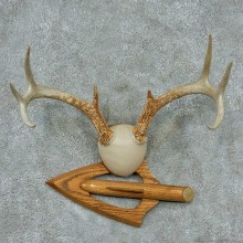 Whitetail-Deer-Antlers-Plaque-Taxidermy-Mount #13340 For Sale @ The Taxidermy Store