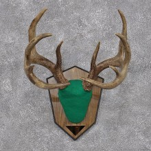 Whitetail Deer Taxidermy Antler Plaque Mount #12427 For Sale @ The Taxidermy Store