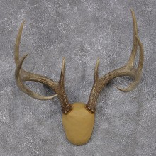 Whitetail Deer Taxidermy Leather Antler Mount #12429 For Sale @ The Taxidermy Store
