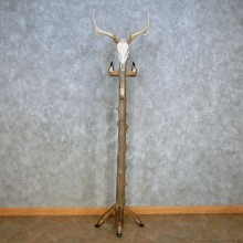 Whitetail Deer Skull Coat Rack For Sale