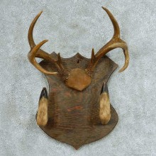 Whitetail Deer Gun Rack Taxidermy Mount #13320 For Sale @ The Taxidermy Store