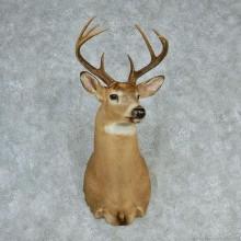 """Whitetail Deer Shoulder - 119 4/8"""""""