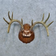 Whitetail Deer Antler Plaque Mount For Sale #15392 @ The Taxidermy Store