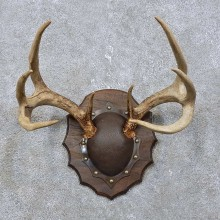 Whitetail Deer Antler Plaque Mount For Sale #15773 @ The Taxidermy Store