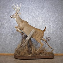 Whitetail Deer Life-Size Mount