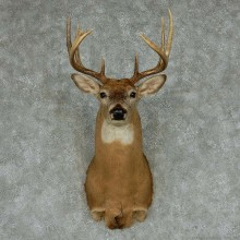 Whitetail Deer Taxidermy Shoulder Mount #13144 For Sale @ The Taxidermy Store