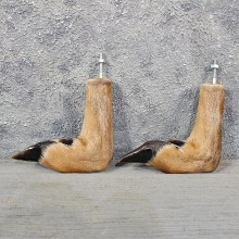 Whitetail Deer Feet #11615 - For Sale @ The Taxidermy Store