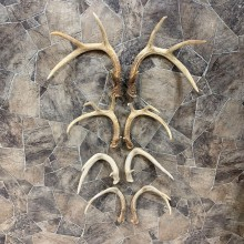 Whitetail Deer Antler Craft Pack For Sale #21819 @ The Taxidermy Store