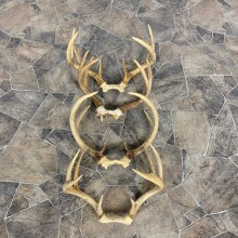 Whitetail Deer Antler Craft Pack For Sale #23016 @ The Taxidermy Store