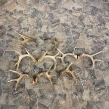 Whitetail Deer Antler Craft Pack For Sale #23043 @ The Taxidermy Store
