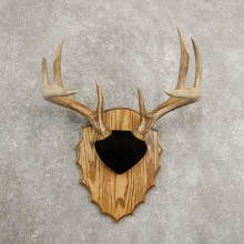 Whitetail Deer Antler Plaque Mount For Sale #20988 @ The Taxidermy Store