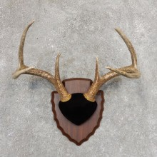 Whitetail Deer Antler Plaque Mount For Sale #21343 @ The Taxidermy Store