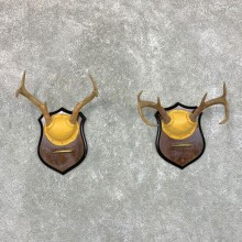 Whitetail Deer Antler Plaque Pair For Sale #22682 @ The Taxidermy Store