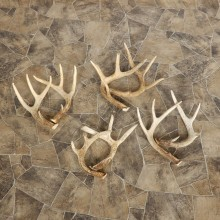 Whitetail Deer Antler Craft Pack For Sale #21325 @ The Taxidermy Store