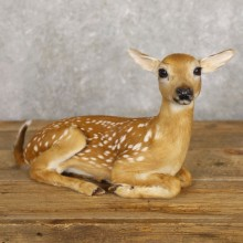 Whitetail Deer Fawn Life-Size Mount For Sale #22221 - The Taxidermy Store