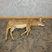 Whitetail Deer Movie Prop Mount For Sale #22363 @ The Taxidermy Store