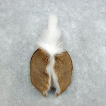 Whitetail Deer Rump Mount For Sale #18403 @ The Taxidermy Store