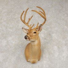 Whitetail Deer Shoulder Mount #21436 For Sale - The Taxidermy Store