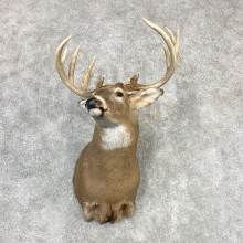 Whitetail Deer Shoulder Mount #21980 For Sale - The Taxidermy Store