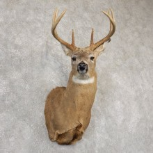 Whitetail Deer Shoulder Mount For Sale #18834 @ The Taxidermy Store