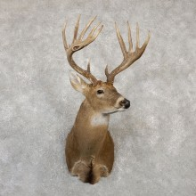 Whitetail Deer Shoulder Mount For Sale #19996 @ The Taxidermy Store