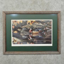 Wood Duck Print For Sale #15751 @ The Taxidermy Store