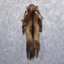 Alaskan Wolverine Taxidermy Skin Fur Hide #12418 For Sale @ The Taxidermy Store