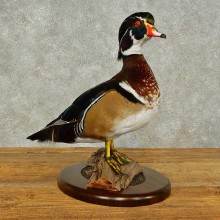 Wood Duck Taxidermy Bird Mount For Sale