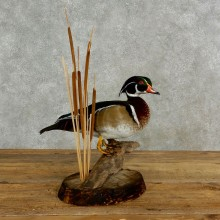 Wood Duck Bird Mount For Sale #17028 @ The Taxidermy Store