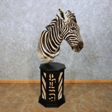 African Zebra Pedestal Mount For Sale #14598 @ The Taxidermy Store