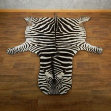African Zebra Full-Size Taxidermy Rug For Sale #17855 @ The Taxidermy Store