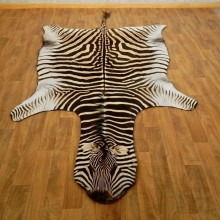 African Zebra Full-Size Taxidermy Rug For Sale #17277 @ The Taxidermy Store