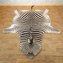 African Zebra Full-Size Taxidermy Rug For Sale #17869 @ The Taxidermy Store