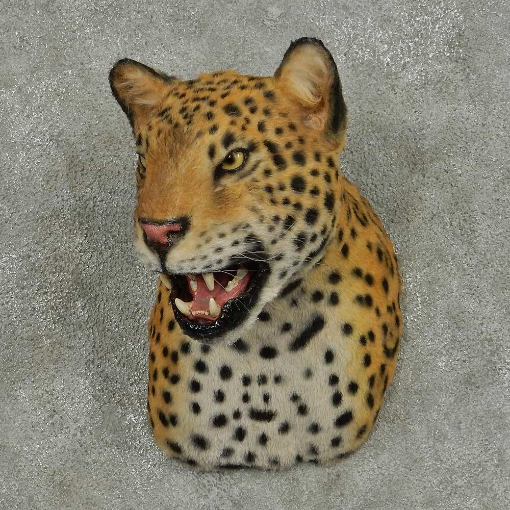 Jaguar Head: Reproduction Jaguar Shoulder Taxidermy Head