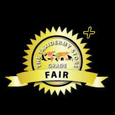 Fair +
