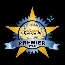 Premier + ✭