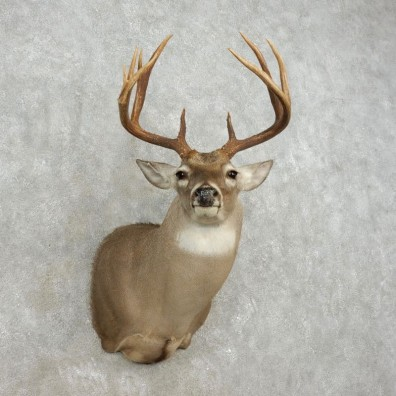 Whitetail Deer Shoulder Mount For Sale #17370 @ The Taxidermy Store