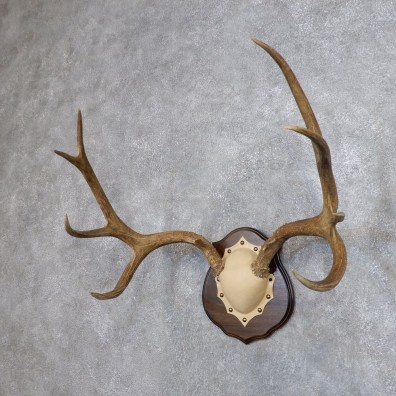 Mule Deer Antler Plaque Mount For Sale #18708 @ The Taxidermy Store