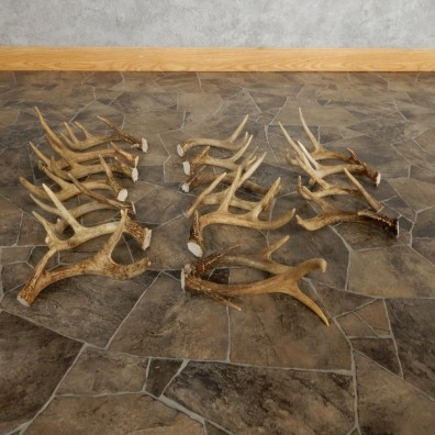 Whitetail Deer Antler Craft Pack For Sale #21326 @ The Taxidermy Store